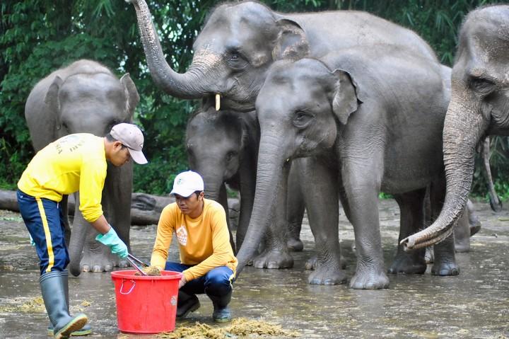 TSI Daur Ulang Kotoran Gajah Jadi Kertas