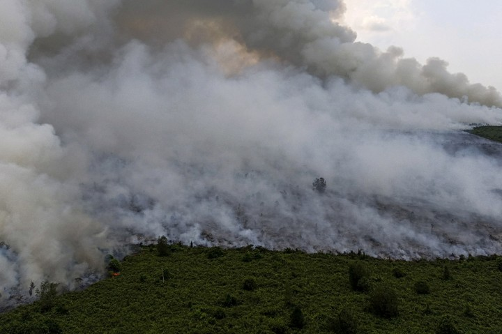 Kebakaran Melanda Lahan Gambut di Musi Banyuasin