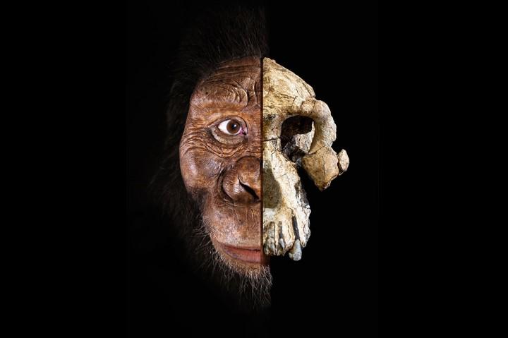 Tengkorak Manusia Purba Berumur 3,8 Juta Tahun Ditemukan