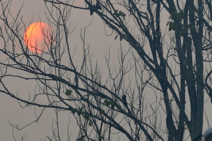 Kabut Asap di Jambi Bertambah Pekat