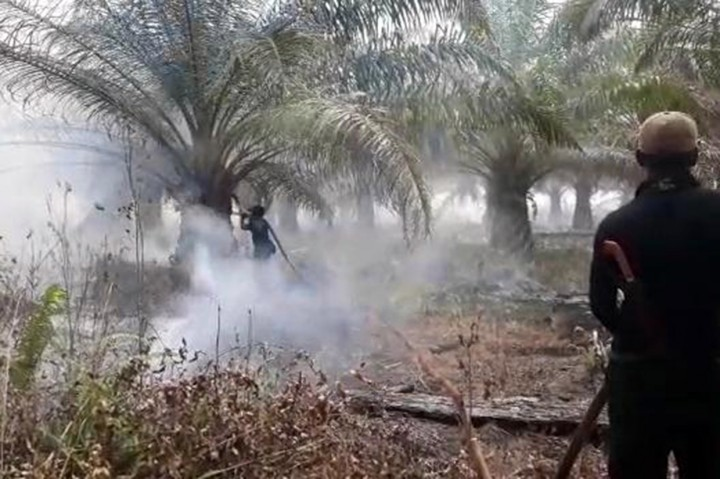 10 Hektare Lahan Gambut di Siak Terbakar