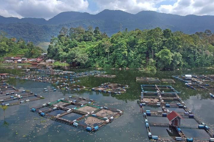 63 Ton Ikan di Danau Maninjau Mati Massal