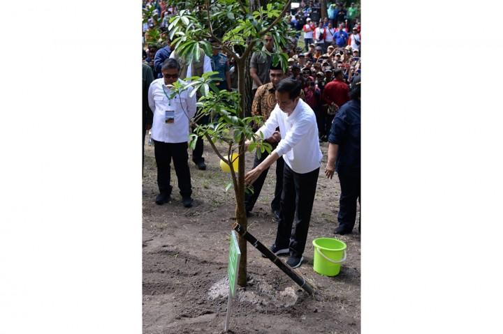 Presiden Lepas Elang Jawa dan Tanam Pulai di Merapi