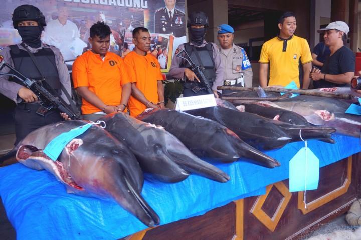 Nelayan Perjualbelikan Lumba-lumba Moncong Panjang Diringkus
