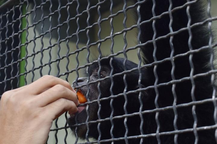 Kebun Binatang Madiun Kesulitan Biaya Operasional
