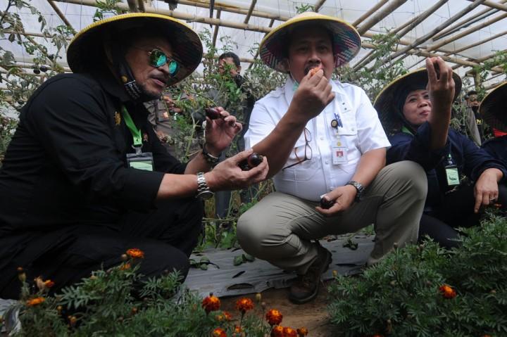 Mentan Dorong Petani Kembangkan Sayur Organik