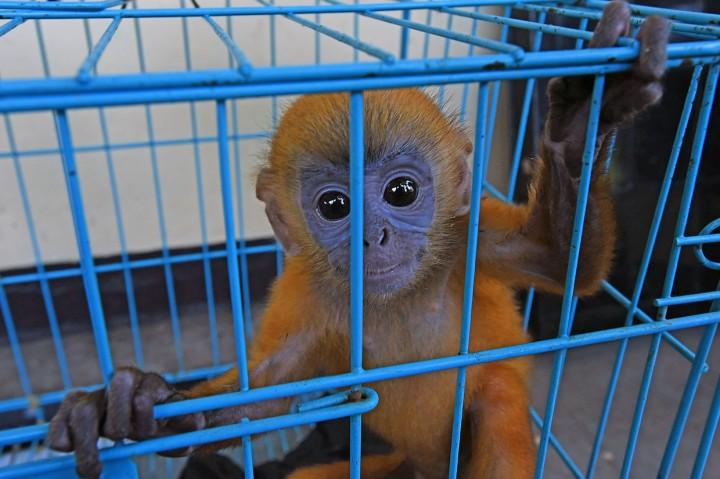 BKSDA Banten Amankan Empat Satwa Dilindungi