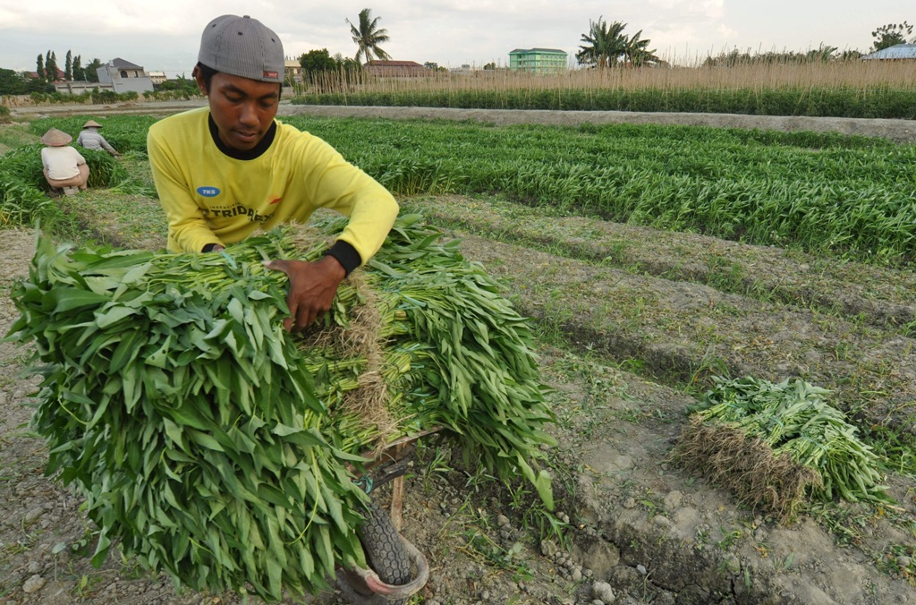 Usaha Pertanian Lampung Didominasi Pertanian Rumah Tangga