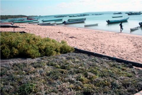 Dua Pengacara Siap Gugat Australia terkait Pencemaran Laut Timor
