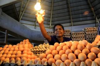 Harga Telur di Ternate Beranjak Naik