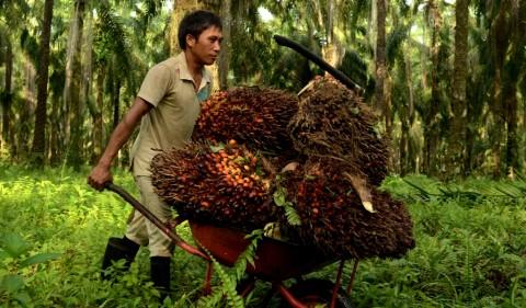 BKPM Apresiasi Inisiatif Investasi Sawit yang Ramah Lingkungan