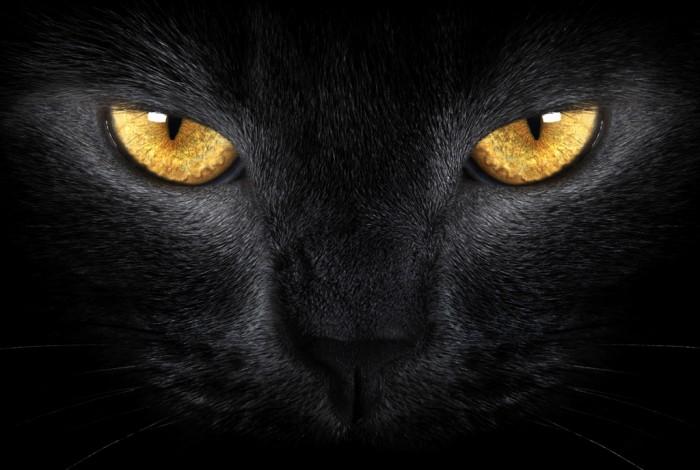 Pecinta Kucing Harus Tahu Begini Dunia Melalui Mata Kucing