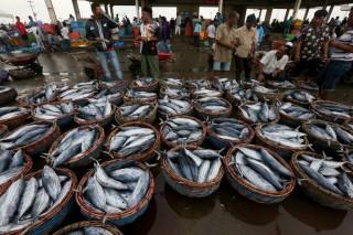 Gagasan Penetapan Stabilisasi Harga Ikan Disambut KNTI