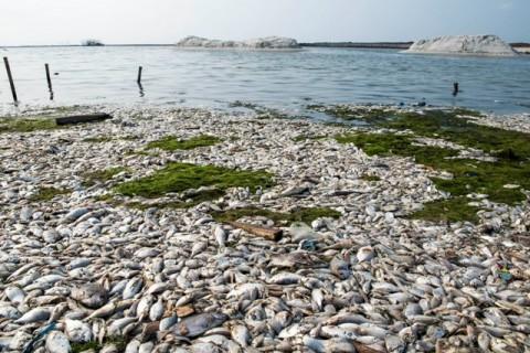 Pemerintah DKI Selidiki Pencemaran Pantai Ancol