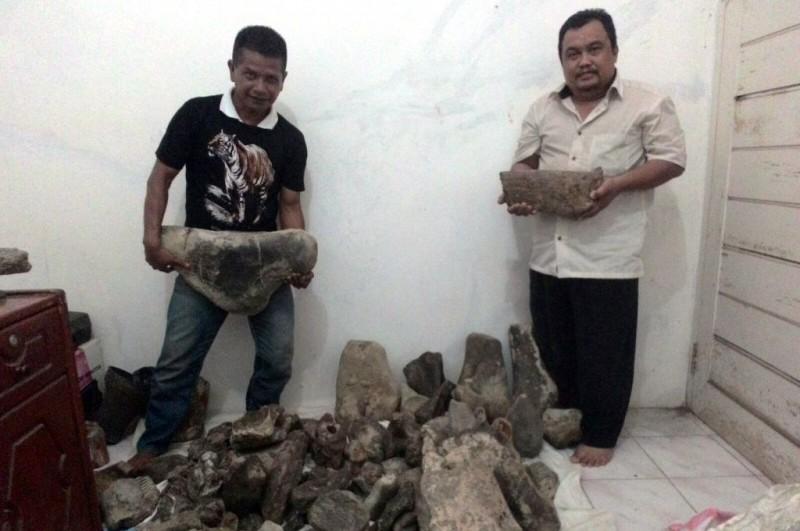 Tim Buton memperlihatkan fosil binatang purbakala yang ditemukan di wilayah Bumiayu dan Tonjong, Kabupaten Brebes. (Metrotvnews.com/Kuntoro Tayubi)