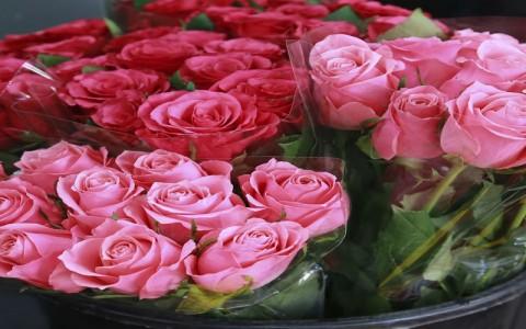 Trik agar Bunga Valentine Anda Tak Cepat Layu