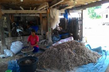Inovasi Rumput Laut di Kertasari
