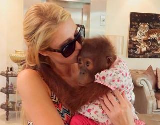 Paris Hilton Minta Maaf kepada Aktivis Pencinta Binatang