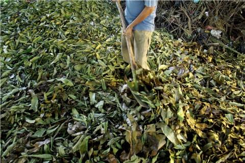 Pupuk Organik Buatan Petani Jepara Tak Terserap