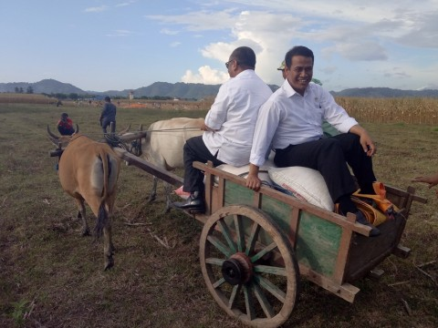 Kementan Ingin Jadikan Gorontalo Lumbung Jagung Nasional