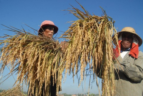 Pengairan HIPPA Jaya Tirta Buat Panen Lebihi Produksi Nasional