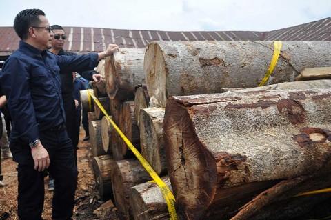 BKSDA Jabar Amankan Ratusan Batang Kayu Selundupan