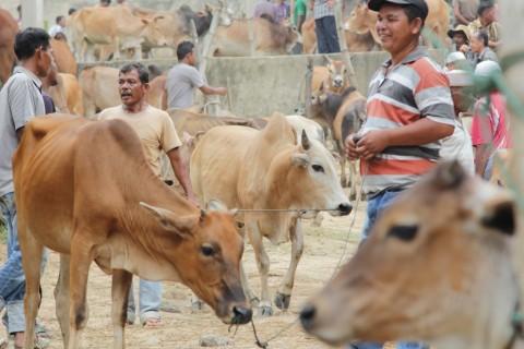 Produksi Populasi Sapi di Jatim Dibidik Capai 4,5 Juta