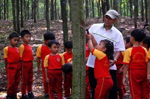 Lebak Punya 34 Ribu Hektare Lahan Karet Rakyat