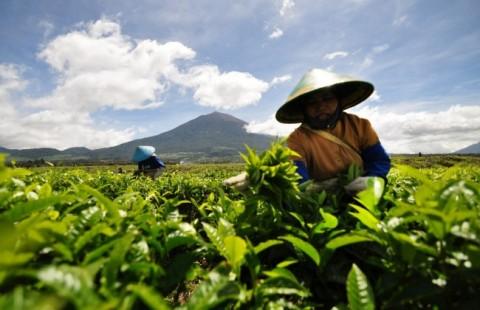 Transaksi di Pasar Lelang Agribis Capai Rp8,75 Miliar