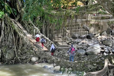 Jembatan Akar Pesisir Selatan Bisa Dilalui Kembali