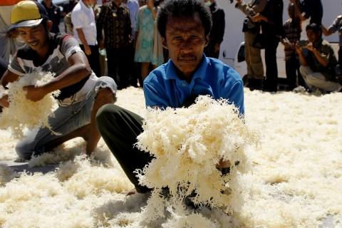 Ekspor Rumput Laut Turun 30% di 2016