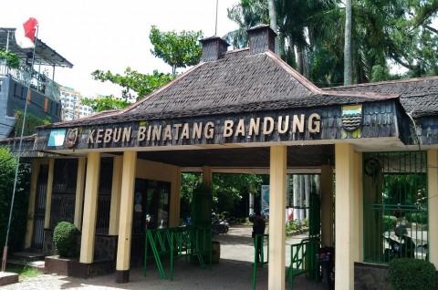 Emil Diundang Datangi Kebun Binatang Bandung