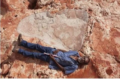 Jejak Kaki Dinosaurus Terbesar Ditemukan di 'Jurassic Park Australia'