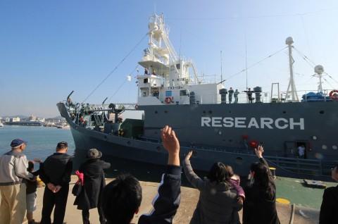Jepang Bunuh 333 Paus dalam Perburuan di Antartika