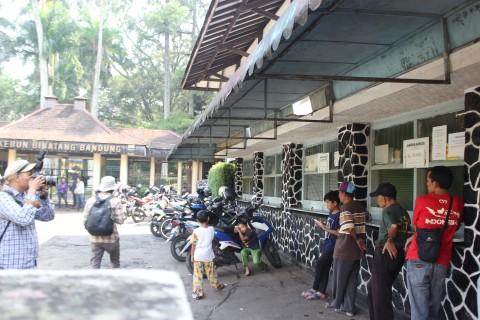 Pengunjung Kebun Binatang Bandung Capai 10.000 Orang