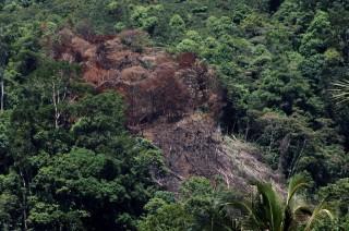 Restorasi Hutan Butuh Kemitraan Multipihak
