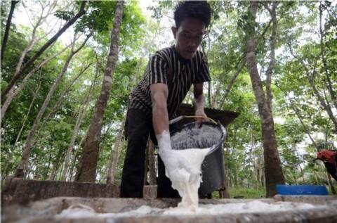 Kualitas Karet Petani Babel Terjelek Nomor Dua di Indonesia
