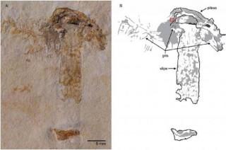 Ilmuwan Temukan Fosil Jamur Tertua di Dunia