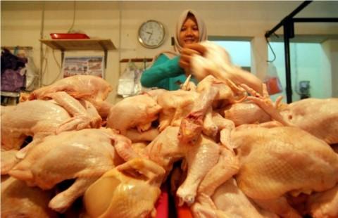 Mendag Berharap Harga Daging Ayam Naik