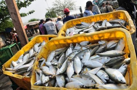 Harga Ikan dan Daging di Ternate Turun