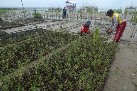Pemkot Surabaya bakal Bangun Kebun Raya Mangrove