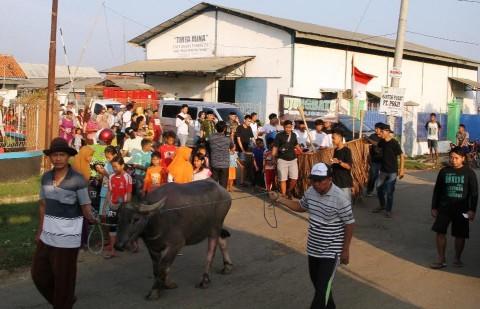 Kirab Kerbau Mengawali Tradisi Pesta Lomban