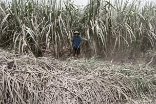 Bupati Malang: PPN Tebu Memberatkan Petani