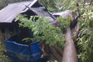 Angin Kencang Terjang Sangihe, Pohon Bertumbangan
