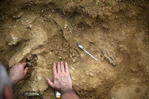 Bocah SD Temukan Fosil Berusia Satu Juta Tahun