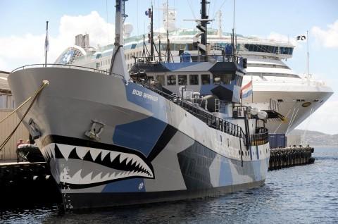 Sea Shepherd Berhenti Kejar Kapal Penangkap Ikan Paus Jepang