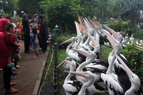 Taman Margasatwa Ragunan Lengang