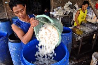 Sari Kelapa, Produk Mikrobial yang Memang Perlu Urea