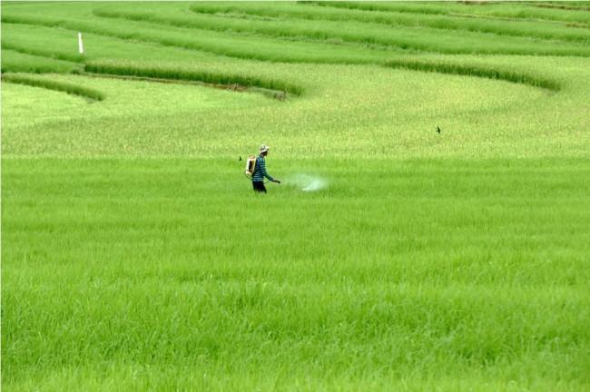 Menggenjot Produksi Pertanian Di Tengah Perubahan Iklim