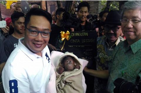 Emil Namakan Bayi Orangutan di KBB Cinta Lestari